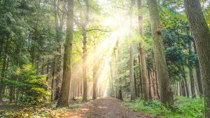 forest path with sunlight