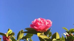 Blooming flower against blue sky