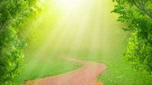 path through forest with link to non-dual meditation